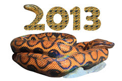 2013 Year of the Snake (include Clipping paths) Royalty Free Stock Photo