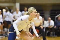 2015 NCAA-volleyboll - Texas @ WVU Royaltyfri Fotografi