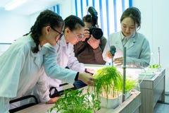 2019-09-01,哈萨克斯坦,库斯塔奈 水栽法 增长的绿色植物在没有土地的水中 关于开头的照片报告  免版税库存照片