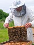 21蜂农 免版税库存图片