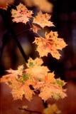 21 цвет осени Стоковые Изображения