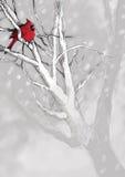 Χριστούγεννα 21 απεικόνιση& Στοκ Εικόνες
