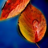 叶子水坑 库存图片