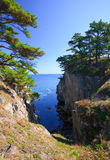 22个海岸线结构树 库存图片