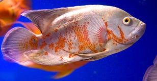 22条水族馆鱼 库存图片