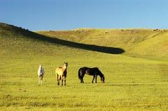 22 hästar Royaltyfri Bild