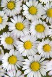 22 kwiat Obraz Stock