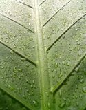 22 leaf water Στοκ εικόνα με δικαίωμα ελεύθερης χρήσης