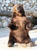 23莫斯科动物园 库存图片
