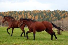 23 konia Obraz Royalty Free