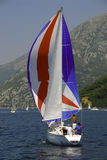 23 regata Obraz Royalty Free