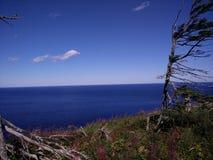 233 - Parc national de l'Île-Bonaventure-et-du-Rocher-Percé : Sentier des Mousses Royalty Free Stock Images