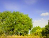 2354 Summer landscape(34).jpg Stock Image