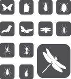 24 насекомого кнопок установили z Стоковое Изображение