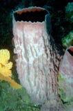 24 andaman мира моря кораллов удивительно Стоковые Фотографии RF