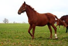 24 häst Arkivfoton