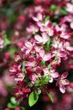 24 ogrodowej wiosny Obrazy Royalty Free