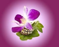 24 smycken Royaltyfria Bilder