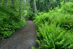 24 trail Royaltyfri Bild