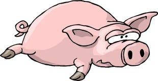 平面的ii猪 免版税库存照片