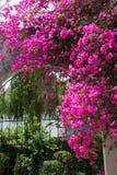 庭院门huatulco墨西哥 免版税库存照片