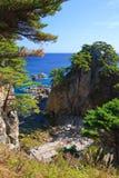 25个海岸线结构树 免版税库存照片