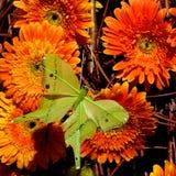 25 цветков Стоковая Фотография