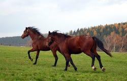 25 konia Zdjęcie Royalty Free