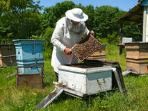 25 pszczelarz Obrazy Stock