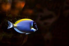 25 tropikalnych ryb Zdjęcie Stock