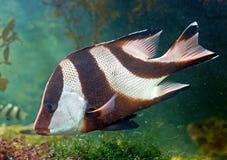 25 tropikalnych ryb Obraz Royalty Free