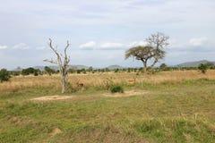 252 parku narodowego mikumi krajobrazu widok szeroki Obrazy Stock