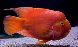 26条水族馆鱼 库存图片