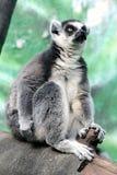 26莫斯科动物园 库存图片