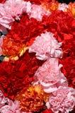 26 blommor Fotografering för Bildbyråer