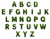 26 letters in the alphabet. The alphabet letters from the leaves Stock Photos