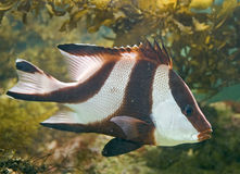26 tropikalnych ryb Zdjęcie Royalty Free
