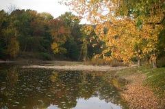 早期的秋天重创的河 库存照片