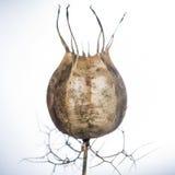 263/365 - Seed Cauldron Royalty Free Stock Photo