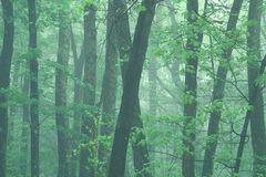 有薄雾的早晨春天 免版税库存图片