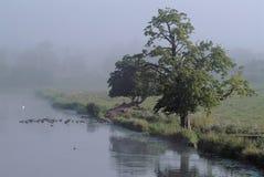 有薄雾的早晨河沿 免版税图库摄影