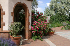 植物的丹佛庭院 库存照片