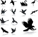 27 установленных икон птиц Стоковая Фотография RF