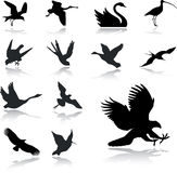 27 inställda fågelsymboler Royaltyfri Fotografi