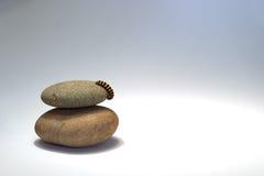 毛虫小卵石 免版税图库摄影