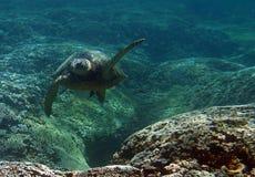 水下绿浪的乌龟 图库摄影