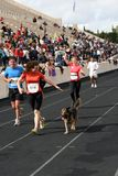 27th Athens Classic Marathon Moments. Anonymous runner has a surprise co-runner enter the stadium with her running towards the finish line Royalty Free Stock Photography