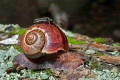 28蜗牛 库存照片