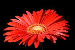 28 kwiatów Zdjęcia Stock
