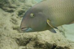 2823 rafa koralowa Zdjęcia Stock
